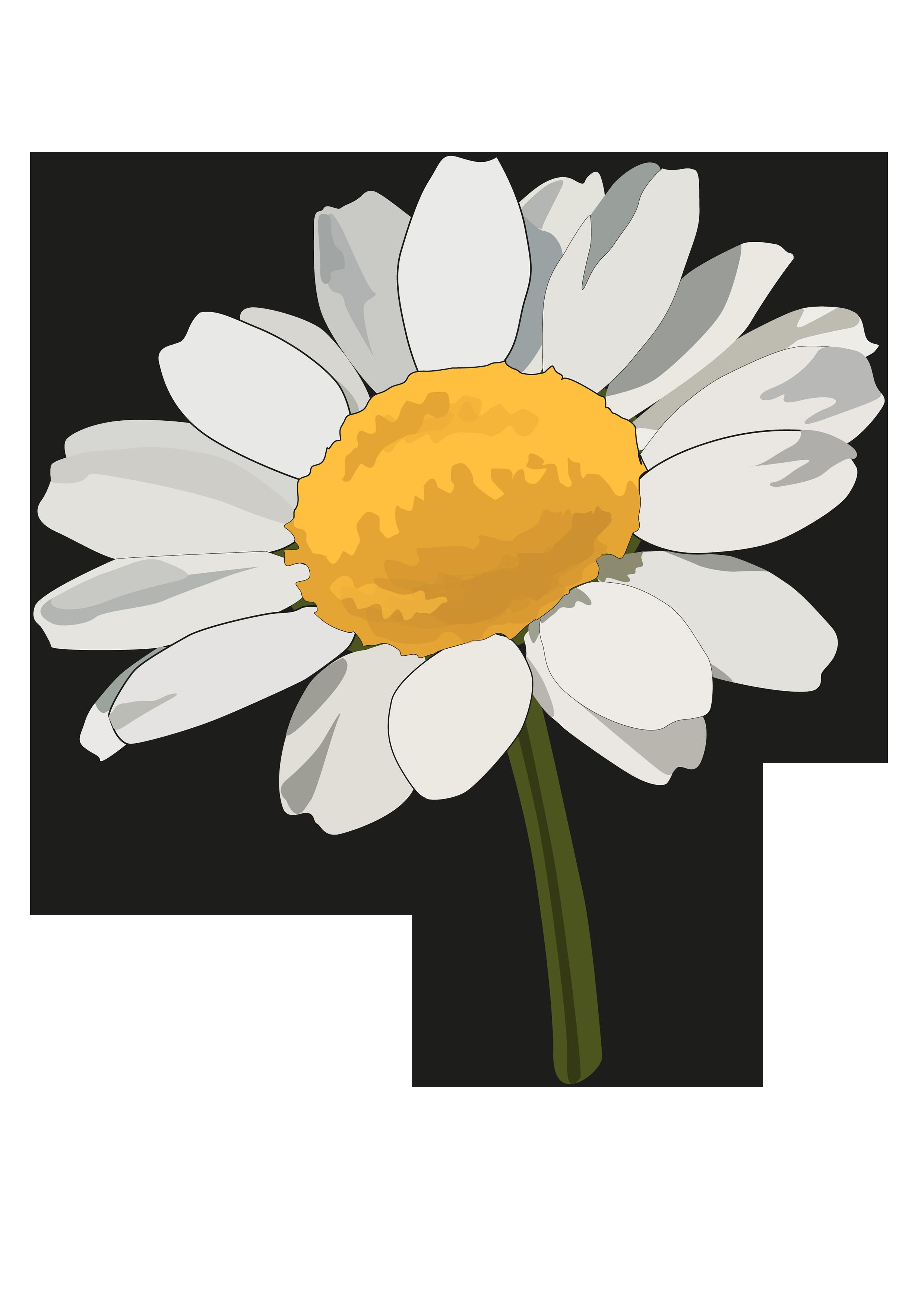 Lámina: Flores » Recursos educativos digitales