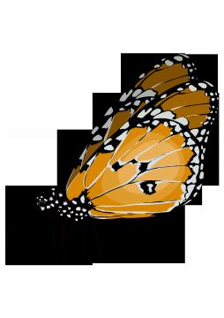 Imagen relacionada en Mediateca