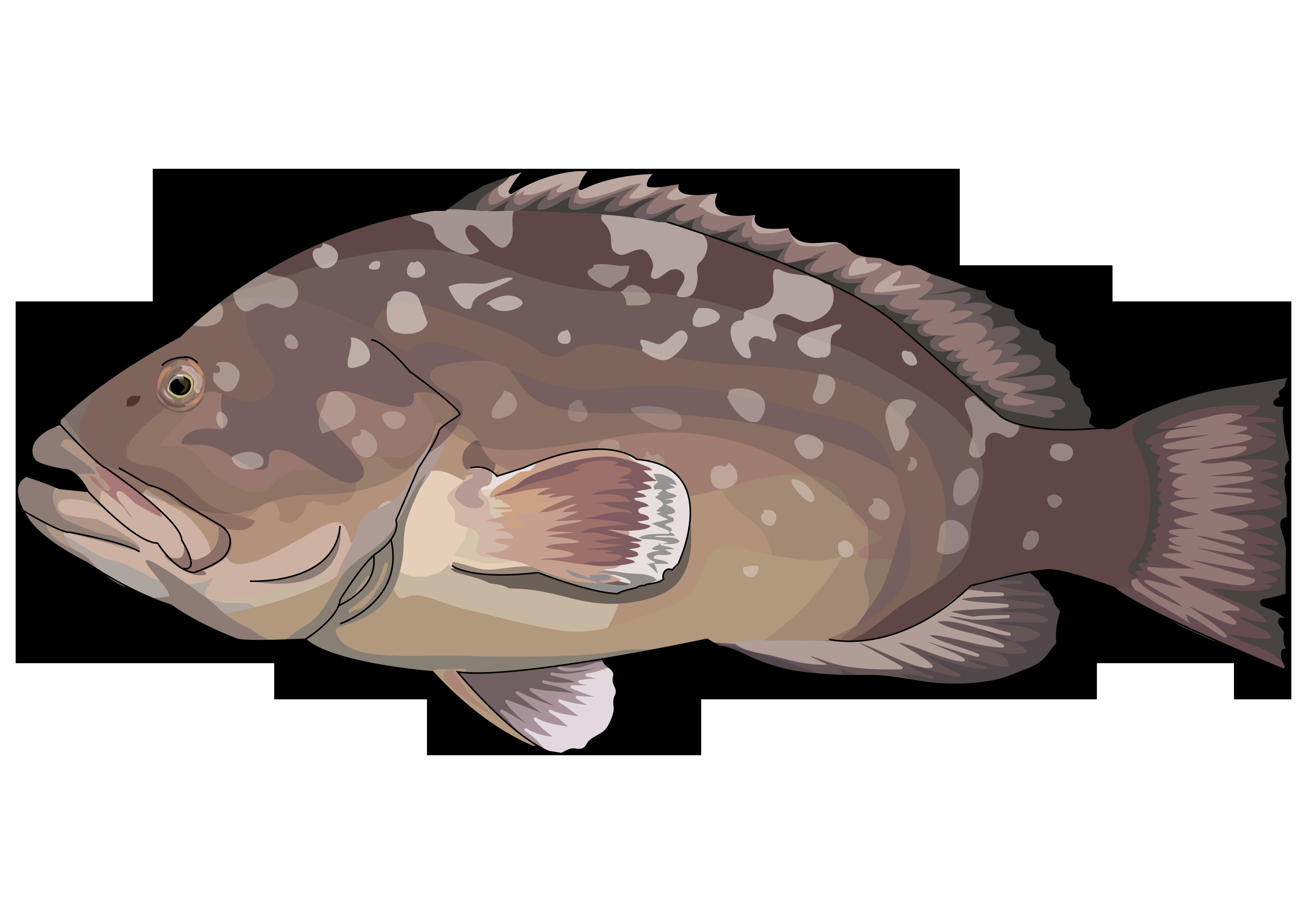 Lámina: Fauna marina, peces de fondo 1 » Recursos educativos digitales