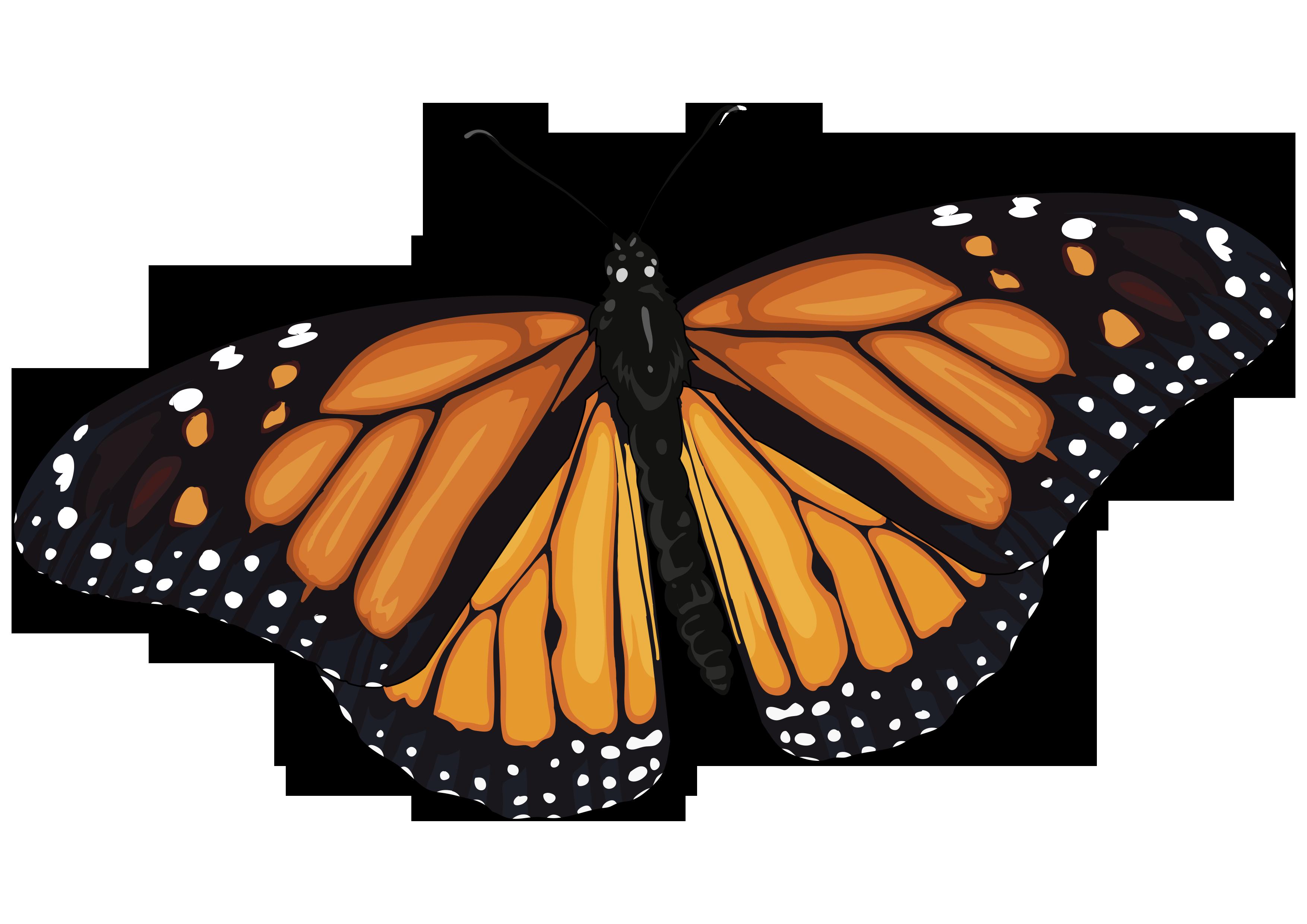 Asombroso La Anatomía De Una Mariposa Componente - Anatomía de Las ...