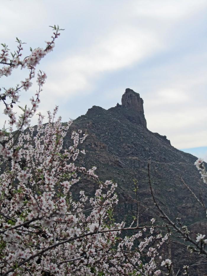 Roque Bentayga y almendro en flor