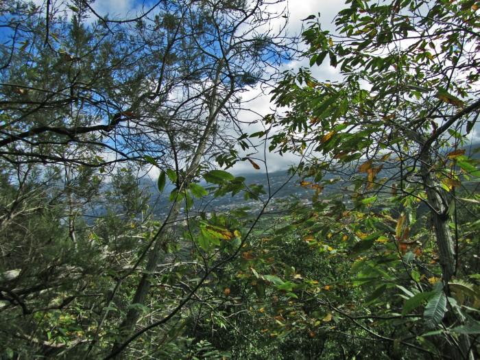 Laurisilva y valle