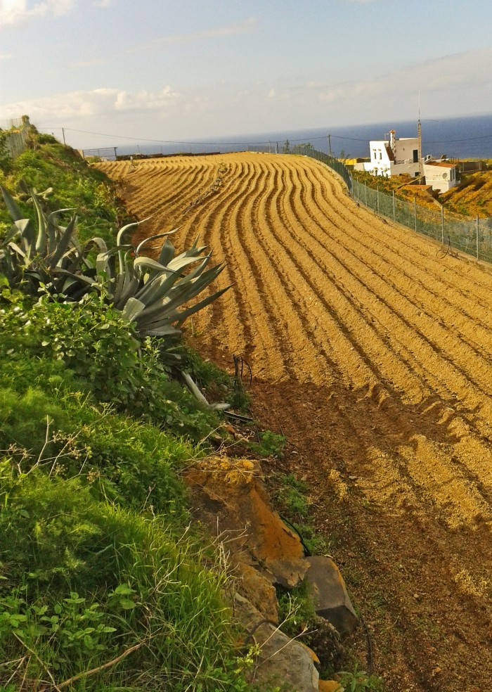 Tierra de cultivo