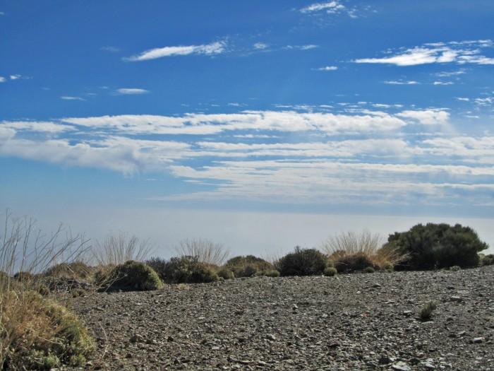 Flora del Teide