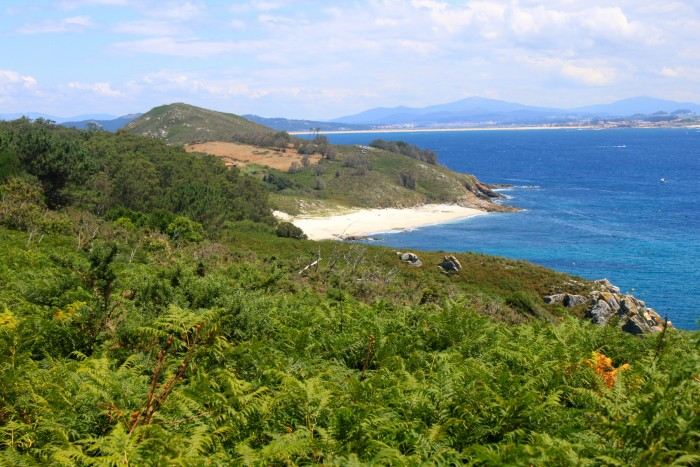 Playa y vegetación