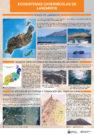 Ecosistemas Cavernícolas de Lanzarote.
