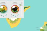 HTML5: Avifauna canaria