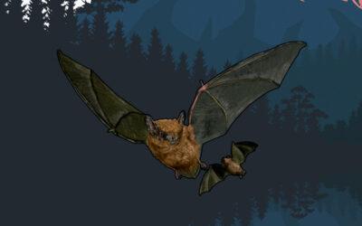 Nuevos artículos enciclopédicos e infografías sobre los murciélagos que habitan en Canarias