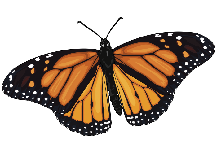 Archivo:Mariposa-Monarca.png - CanariWiki