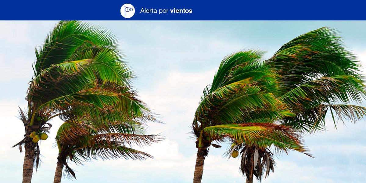 El Gobierno de Canarias declara la situación de Alerta por Vientos en Tenerife y La Palma