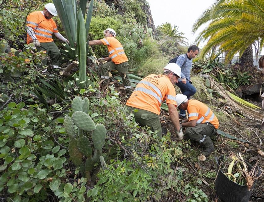 Operarios realizando labores de erradicación de especies invasoras