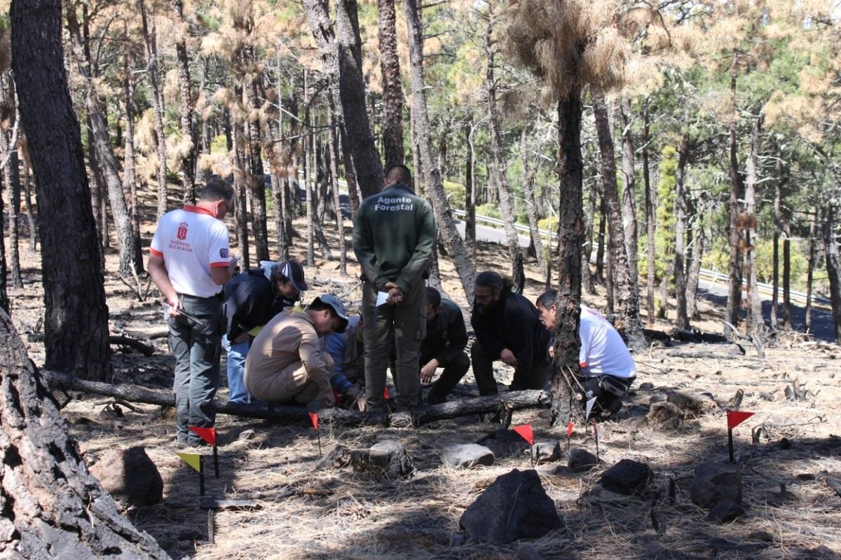Práctica investigación incendios forestales