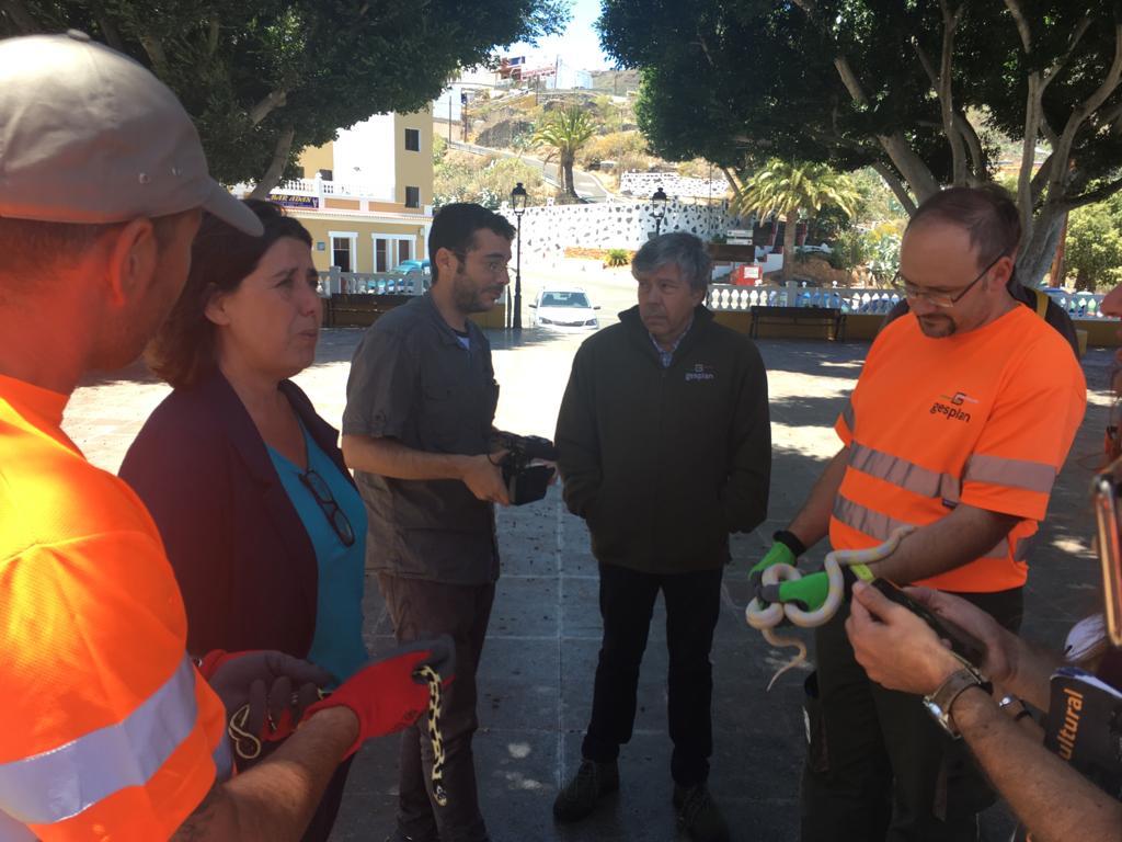 Canarias refuerza con 18 nuevos operarios el equipo de control de la culebra californiana