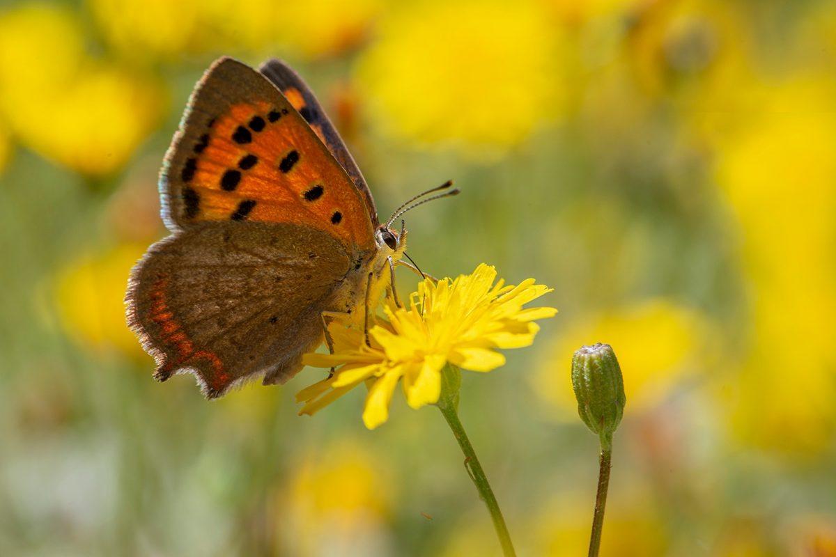 Imagen del Banco de Datos de Biodiversidad