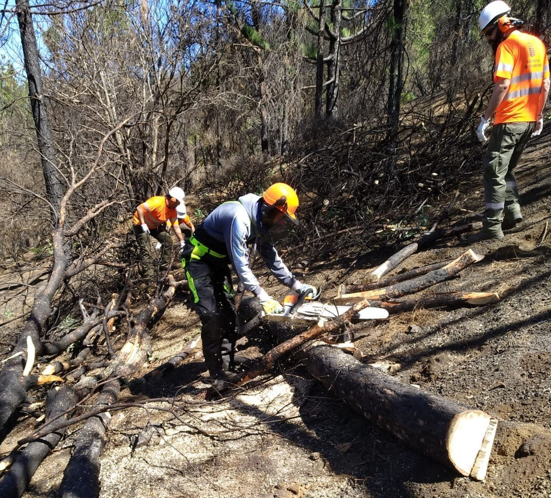 Trabajos de restauración por incendio Gran Canaria