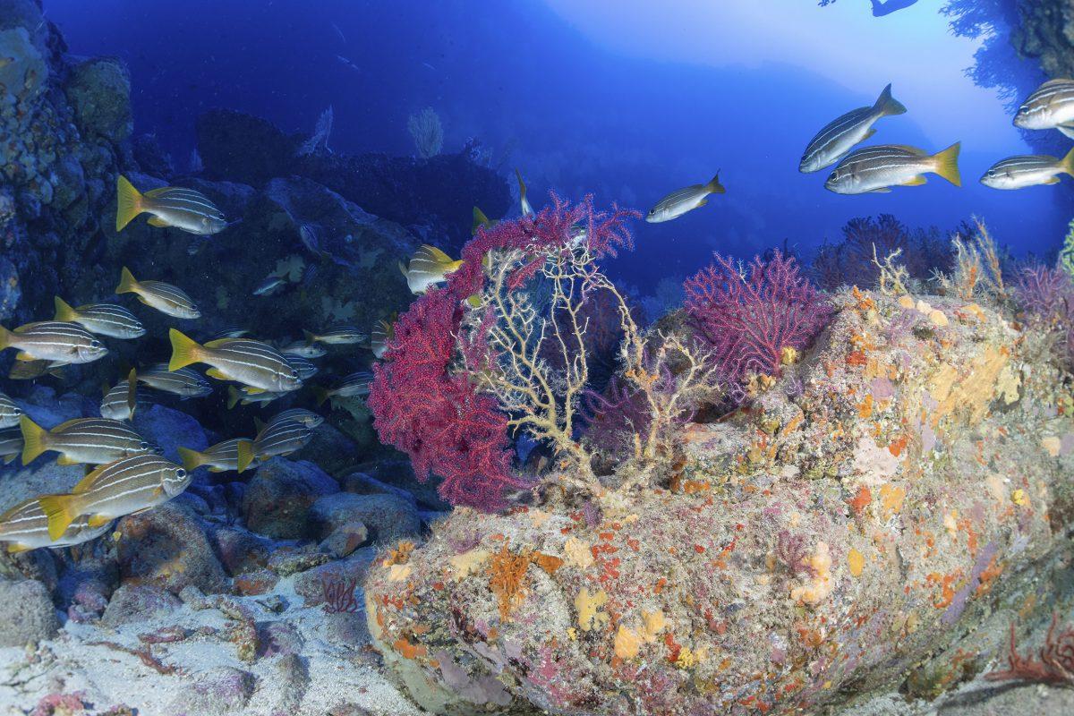 Imagen de fondos marinos