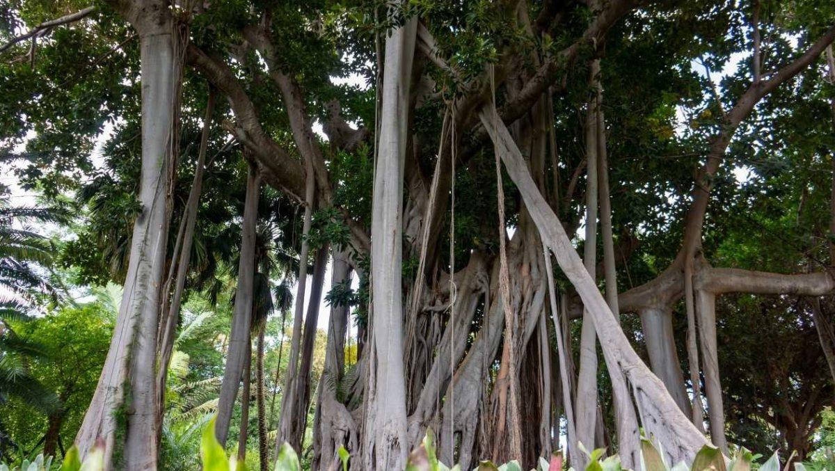 Imagen de árboles singulares