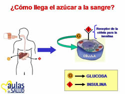 049tallereducaciondiabetologica.jpg